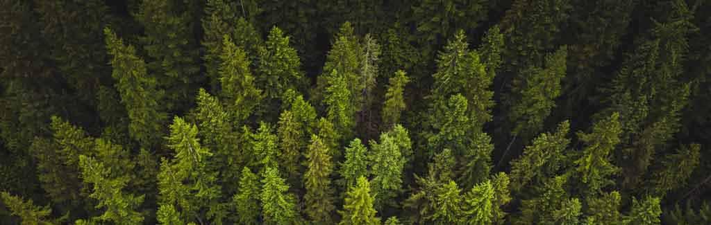 go green reducir huella carbono paack